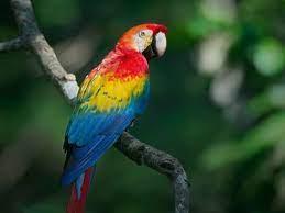 วิธีเลี้ยงนกแก้ว Parrot