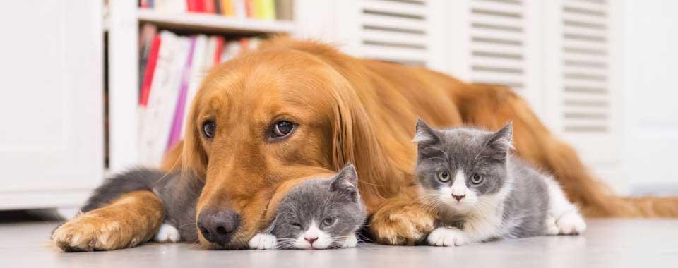 การสัตว์เลี้ยง ในบ้าน เลี้ยงอย่างไรให้ปลอดภัย ทั้งสัตว์ เจ้าของ และคนรอบข้าง