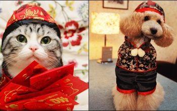 วันแต่งตัวให้สัตว์เลี้ยง อวดแฟชั่นเก๋ ๆ ของคนรักน้องหมา-แมว