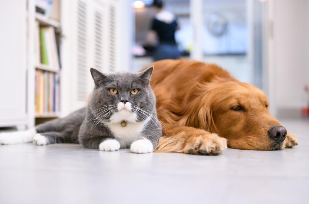 ข้อควรรู้ก่อนรับ น้องหมา น้องแมว มาเลี้ยง