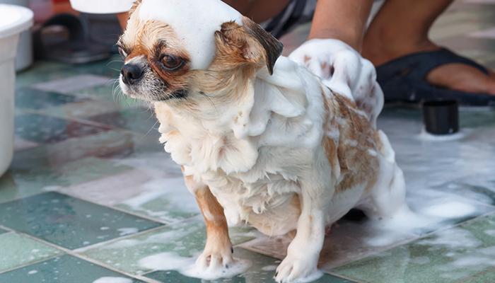การอาบน้ำให้สุนัขอย่างถูกวิธี