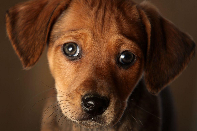 สังเกตุยังไงว่าน้องหมาของเรากำลังเครียด